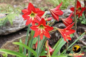 Flora on Machupicchu